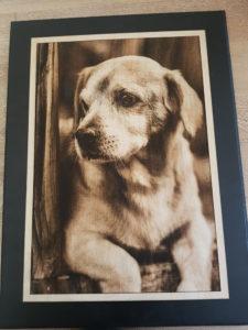 Gravure photo bois chien