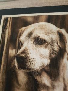 photo laser laser chien